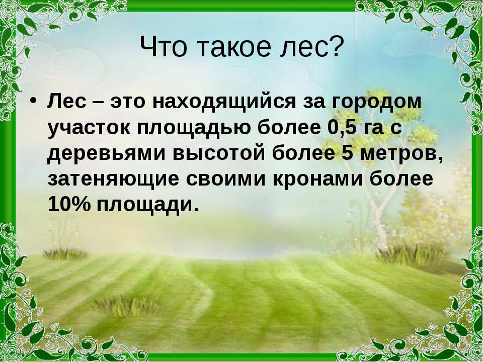 Что такое лес? Лес – это находящийся за городом участок площадью более 0,5 га...