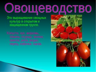 Это выращивание овощных культур в открытом и защищенном грунте. Капуста, лук,