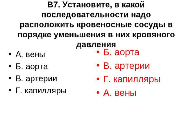 В7. Установите, в какой последовательности надо расположить кровеносные сосуд...