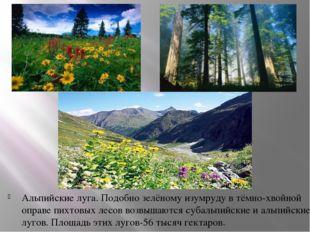 Альпийские луга. Подобно зелёному изумруду в тёмно-хвойной оправе пихтовых ле