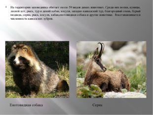 На территории заповедника обитает около 59 видов диких животных. Среди них во