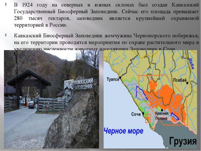 В 1924 году на северных и южных склонах был создан Кавказский Государственный...