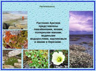 Растения Арктики представлены лишайниками, мхами, полярными маками, водяными