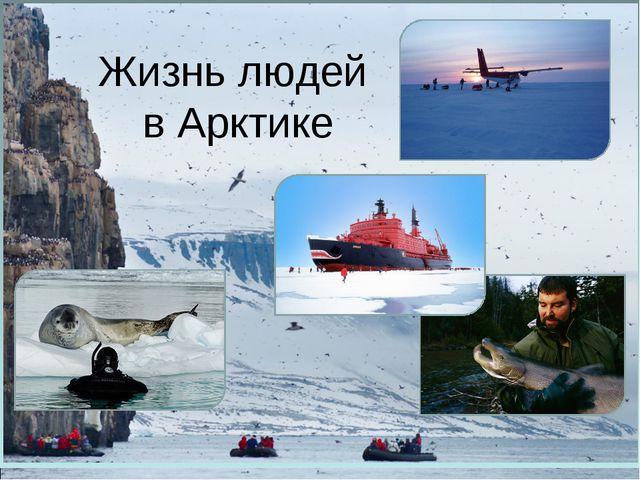 Жизнь людей в Арктике