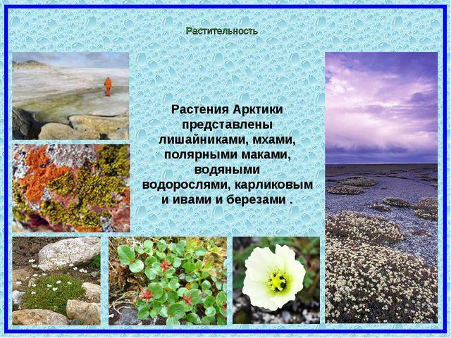 Растения Арктики представлены лишайниками, мхами, полярными маками, водяными...