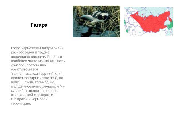 Гагара Голос чернозобой гагары очень разнообразен и трудно передается словами...