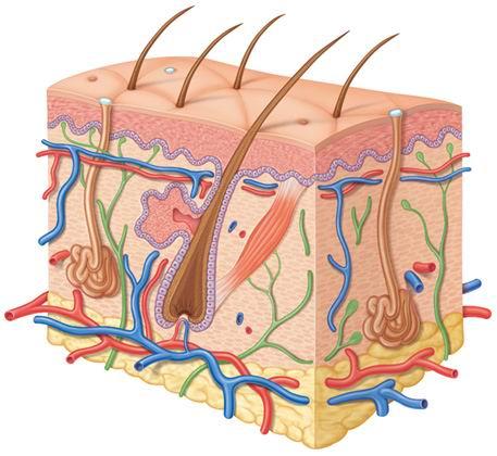 http://med-dovidka.com.ua/images/stories/kliniki/koregent/dermatolog1.jpg