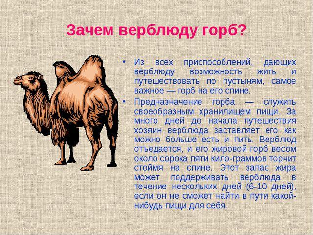 Зачем верблюду горб? Из всех приспособлений, дающих верблюду возможность жить...
