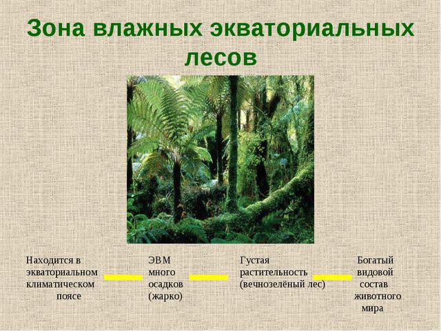Зона влажных экваториальных лесов