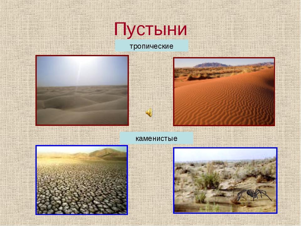 Пустыни тропические каменистые
