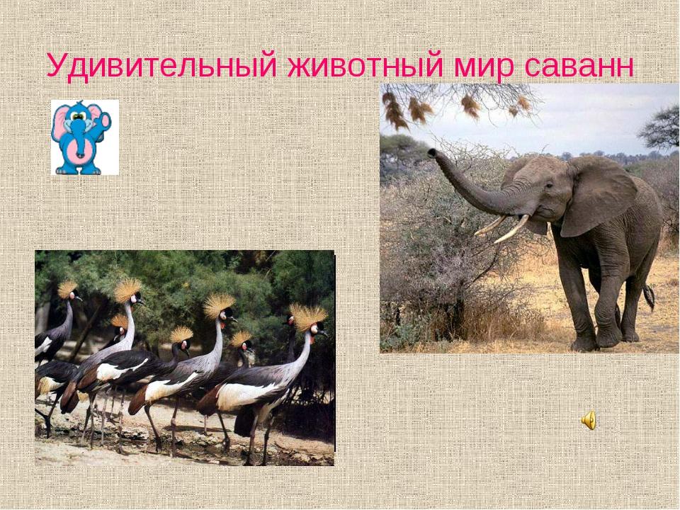 Удивительный животный мир саванн