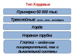 Тип Хордовые Двусторонняя симметрия Хорда Трехслойные: экто-, мезо-, энтодерм