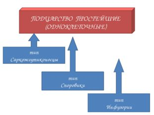 ПОДЦАРСТВО ПРОСТЕЙШИЕ (ОДНОКЛЕТОЧНЫЕ) тип Саркожгутиконосцы тип Споровики тип