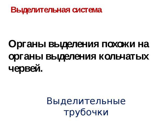 Выделительная система Органы выделения похожи на органы выделения кольчатых ч...
