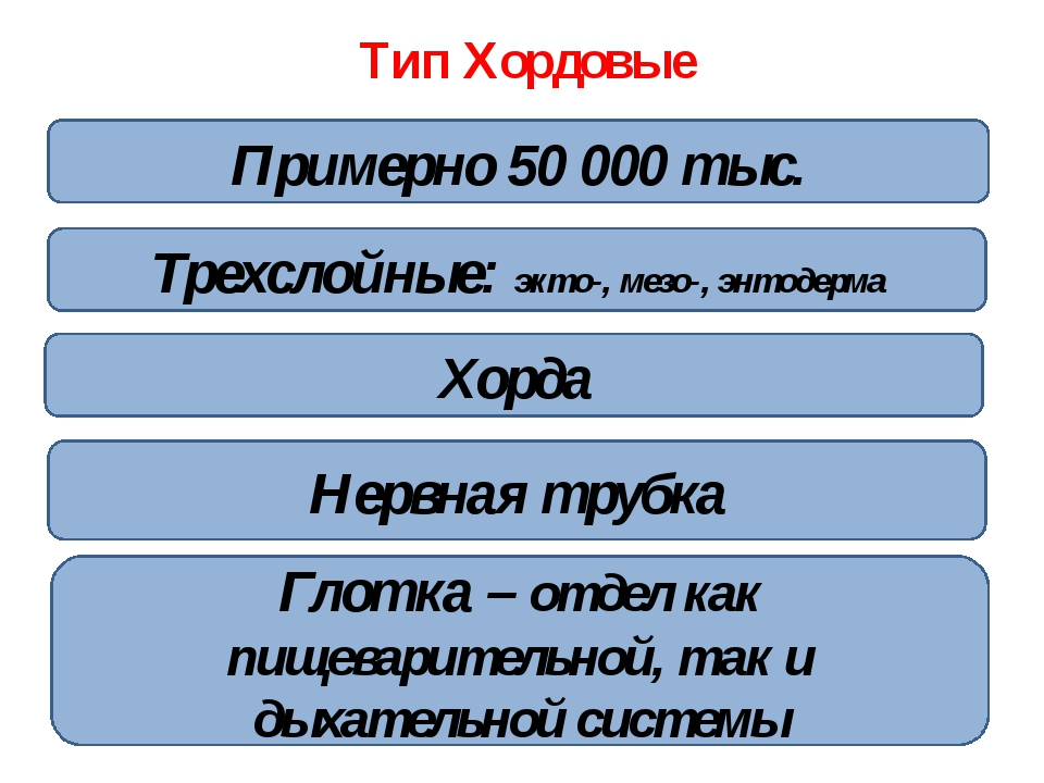 Тип Хордовые Двусторонняя симметрия Хорда Трехслойные: экто-, мезо-, энтодерм...