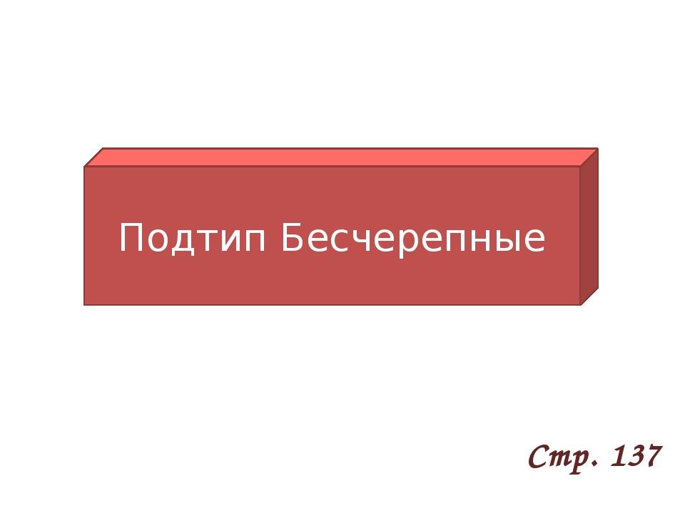 Подтип Бесчерепные Стр. 137