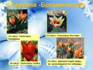 IV-группа -Ботанические 12 класс.Тюльпаны Кауфмана 13 класс.Тюльпаны Фостер