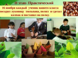 II этап- Практический 16 ноября каждый ученик нашего класса посадил луковицу