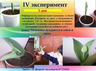 IV эксперимент 18 февраля мы занесли наши тюльпаны в тёплое помещение. Измери