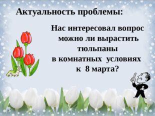 Актуальность проблемы: Нас интересовал вопрос можно ли вырастить тюльпаны в к