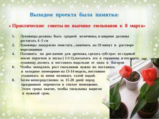 Выходом проекта была памятка: « Практические советы по выгонке тюльпанов к 8