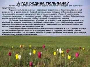 А где родина тюльпана? Многие люди ошибочно считают ,что родина тюльпанов Гол