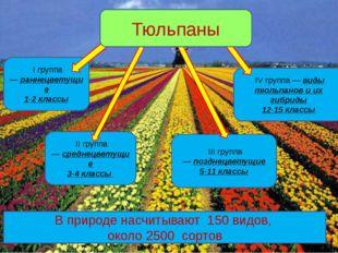 IV группа —виды тюльпанов и их гибриды 12-15 классы I группа—раннецветущие
