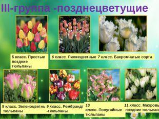 III-группа -позднецветущие 5 класс.Простые поздние тюльпаны 6 класс.Лилиец