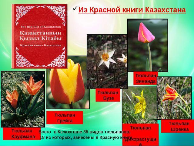 Из Красной книги Казахстана Тюльпан Кауфмана Тюльпан Грейга Тюльпан Бузе Тюль...