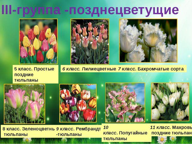 III-группа -позднецветущие 5 класс.Простые поздние тюльпаны 6 класс.Лилиец...
