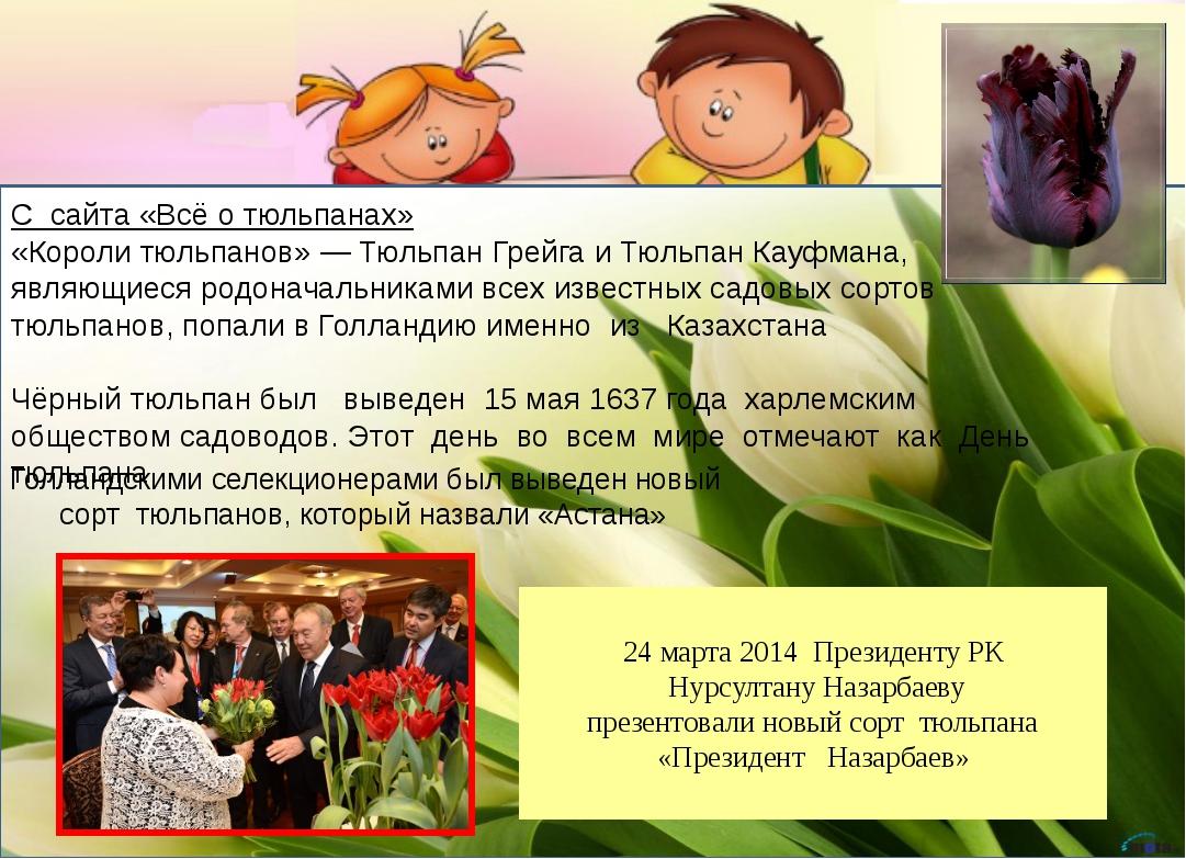С сайта «Всё о тюльпанах» «Короли тюльпанов» — Тюльпан Грейга и Тюльпан Кауф...