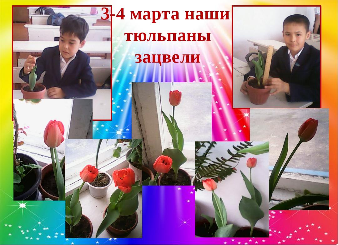 3-4 марта наши тюльпаны зацвели