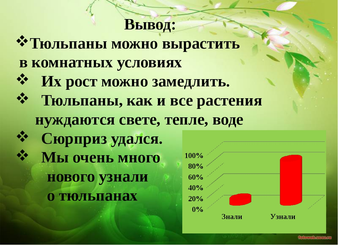 Вывод: Тюльпаны можно вырастить в комнатных условиях Их рост можно замедлить....