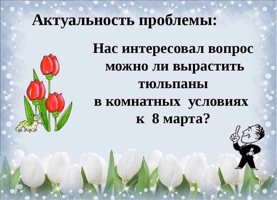 Актуальность проблемы: Нас интересовал вопрос можно ли вырастить тюльпаны в к...