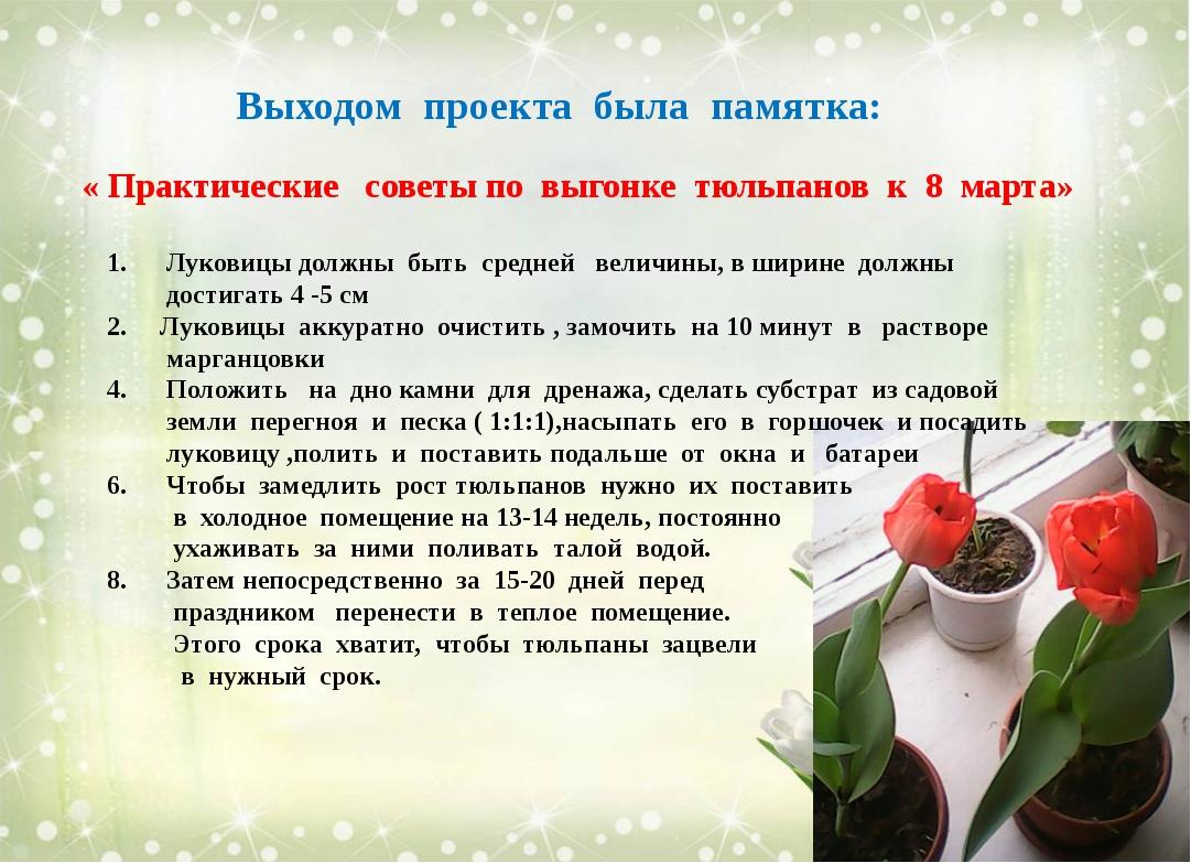 Выходом проекта была памятка: « Практические советы по выгонке тюльпанов к 8...