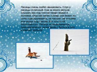 Лисицы очень любят мышковать. Слух у лисицы отличный. Она за много метров слы