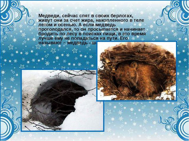 Медведи, сейчас спят в своих берлогах, живут они за счет жира, накопленного в...