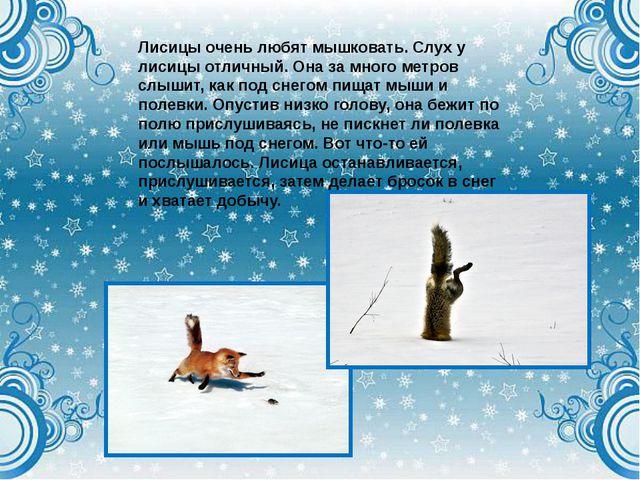 Лисицы очень любят мышковать. Слух у лисицы отличный. Она за много метров слы...