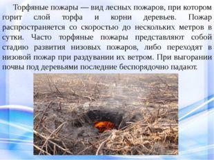Торфяные пожары — вид лесных пожаров, при котором горит слой торфа и корни