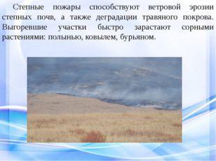 Степные пожары способствуют ветровой эрозии степных почв, а также деградаци