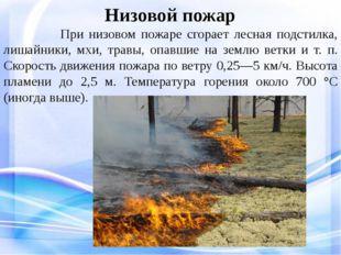 Низовой пожар При низовом пожаре сгорает лесная подстилка, лишайники, мхи, т