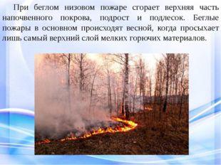 При беглом низовом пожаре сгорает верхняя часть напочвенного покрова, подро