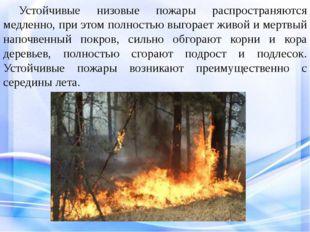 Устойчивые низовые пожары распространяются медленно, при этом полностью выг