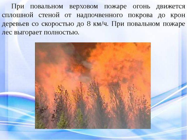 При повальном верховом пожаре огонь движется сплошной стеной от надпочвенно...