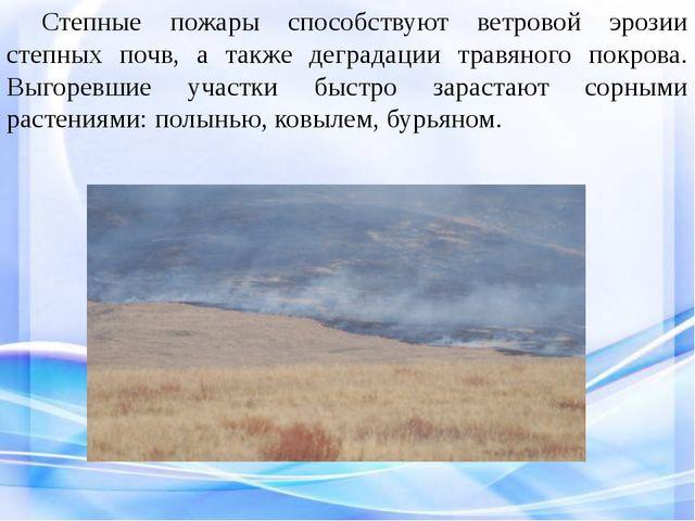Степные пожары способствуют ветровой эрозии степных почв, а также деградаци...