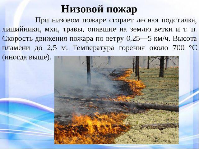 Низовой пожар При низовом пожаре сгорает лесная подстилка, лишайники, мхи, т...