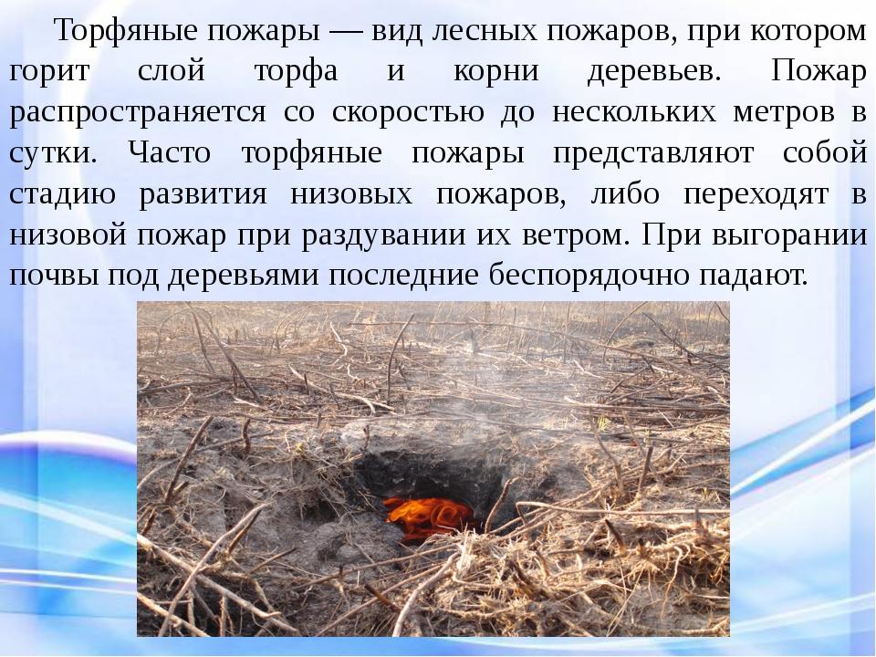Торфяные пожары — вид лесных пожаров, при котором горит слой торфа и корни...