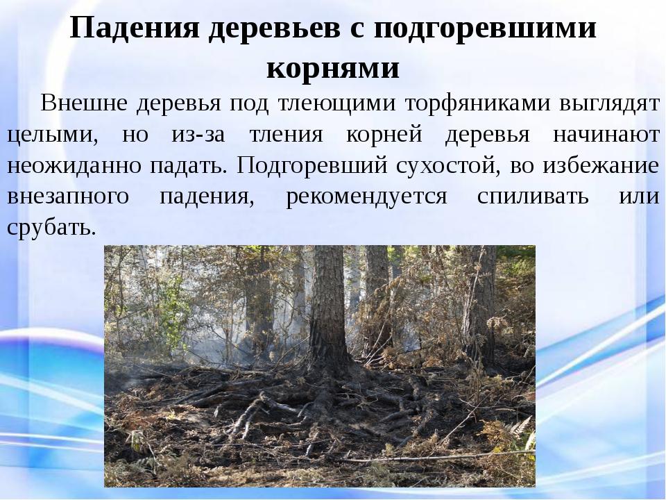 Падения деревьев с подгоревшими корнями Внешне деревья под тлеющими торфяни...