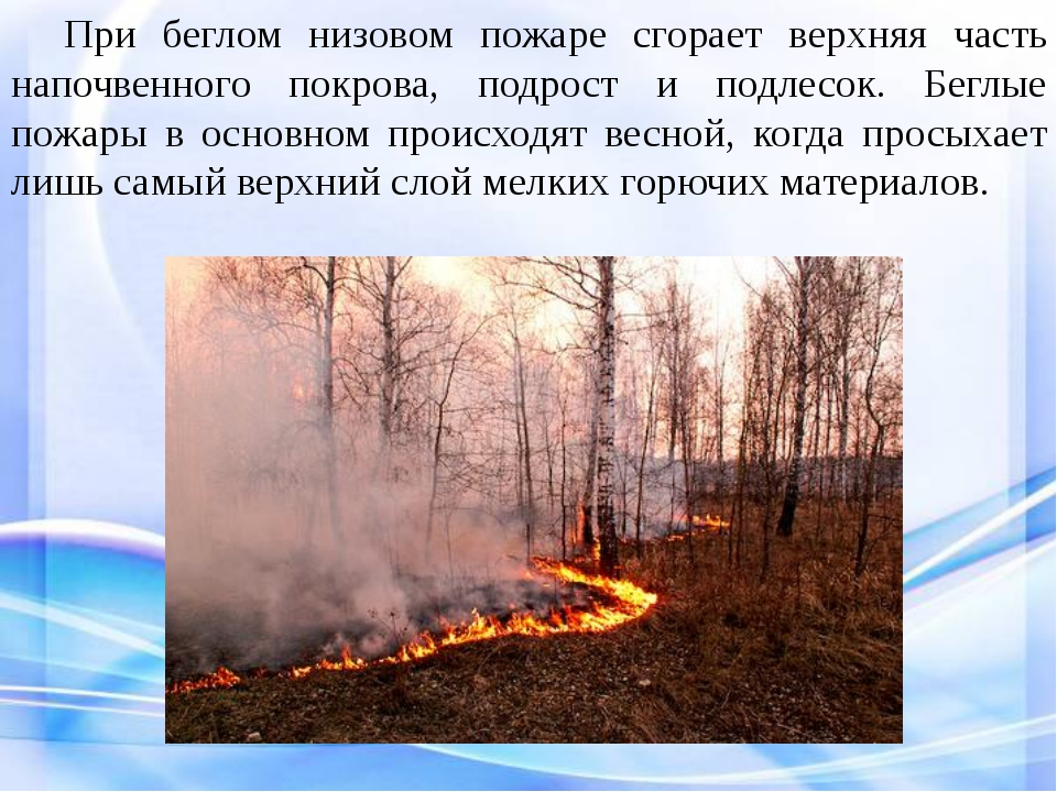 При беглом низовом пожаре сгорает верхняя часть напочвенного покрова, подро...