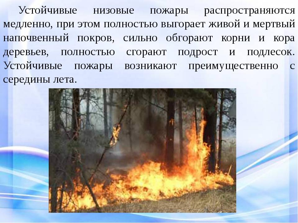 Устойчивые низовые пожары распространяются медленно, при этом полностью выг...